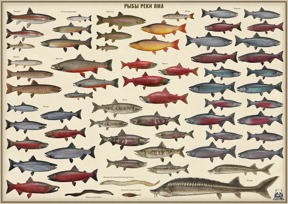 poster_yama_fishes_2000px.jpg